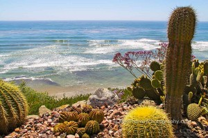 Swamis-Encinitas-CA-Bluff-Reef-Cactus-Ocean-View-Kyle-Thomas