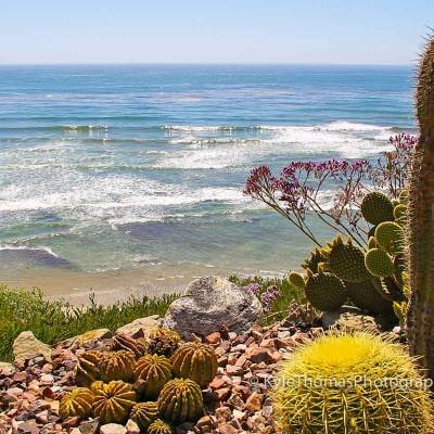 Swamis-Encinitas-CA-Bluff-Reef-Cactus-Garden-Ocean-View-Kyle-Thomas