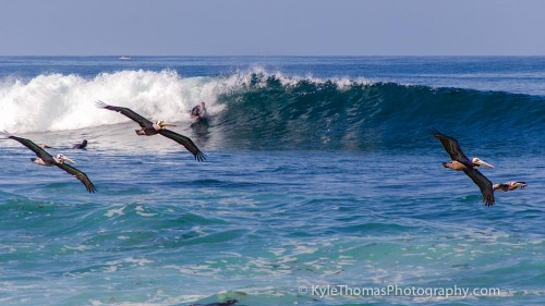 Bodyboarder-Pelicans-Waves-Surfing-San-Diego-Ca-Kyle-Thomas-Photography