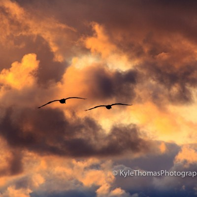 Sunset-Pelicans-Kyle-Thomas-Photography
