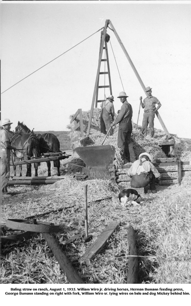 Baling straw on ranch, August 1, 1935.  William Wiro jr. driving horses, Herman Bumann feeding press, George Bumann standing on right with fork, William Wiro sr. tying wires on bale and dog Mickey behind him.  Other man on derrick wagon with backturned is perhaps Fritz Wiegand.